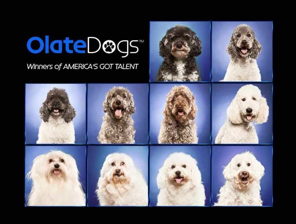 Dog Gone Entertainment: Surprise Your Guests with the Olate Dogs Group