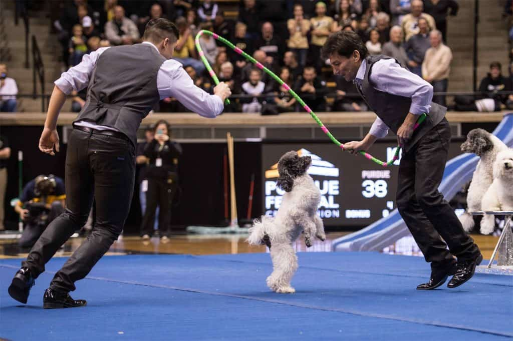 Corporate Entertainment Ideas: Wow Your Guests with the Olate Dogs Group